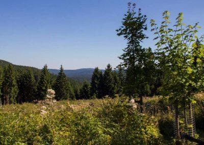Thüringer Wald, Rastplatz Großvaterstuhl bei Oberhof